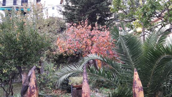 Giardino autunnale  - Bogliasco (479 clic)