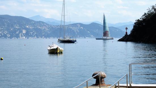 Una vela a Portofino (757 clic)