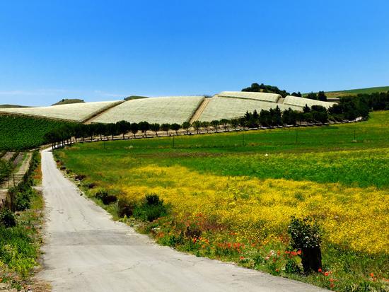 Paesaggio rurale - Caltanissetta (1509 clic)