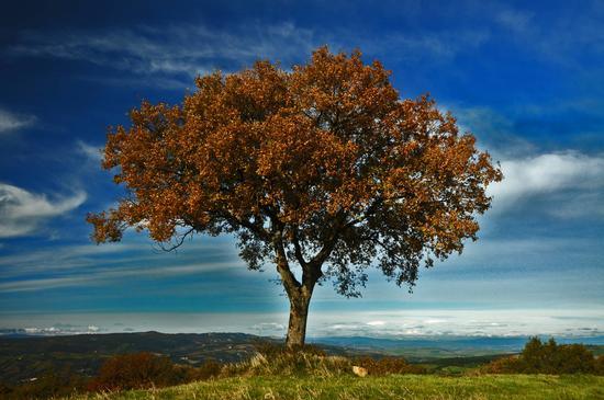 Sul Monte Amiata - Arcidosso (2306 clic)