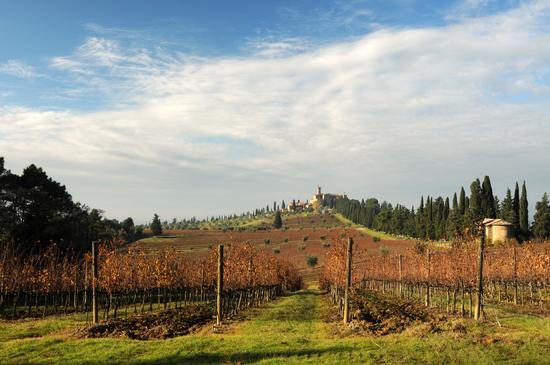 Autunno... - Montalcino (1080 clic)