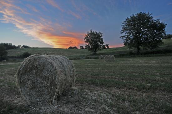 - Monteroni d'arbia (2566 clic)