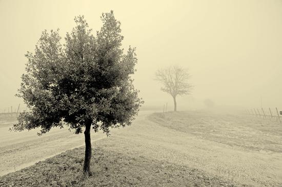 Nebbia... - Montalcino (862 clic)