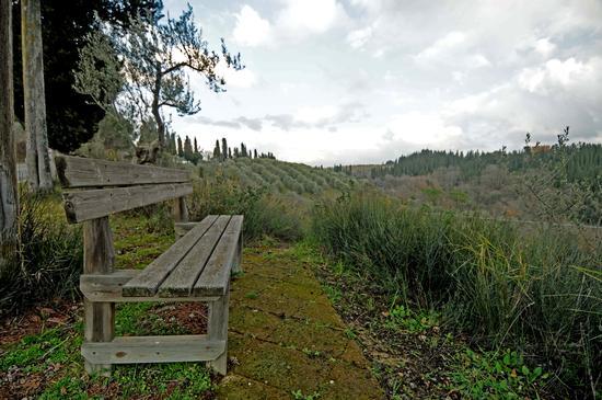 Osservando Monte oliveto Maggiore. - Asciano (1299 clic)