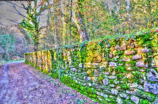 Il muro del viale a Montegabbione (2060 clic)