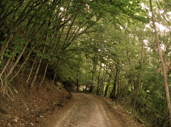 Quiete - Barrea (2443 clic)