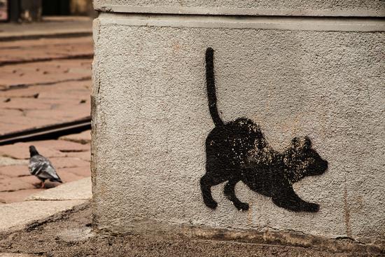 Mi è semblato di vedele un gatto !!!! - Milano (1028 clic)
