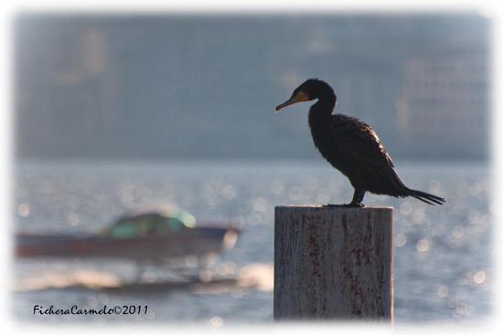 il custode del lago... - Como (1222 clic)