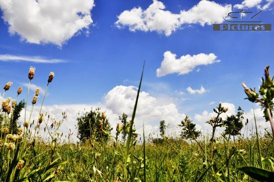 Prospettiva del cielo. - Russi (685 clic)