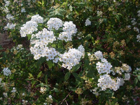 fiori  (430 clic)
