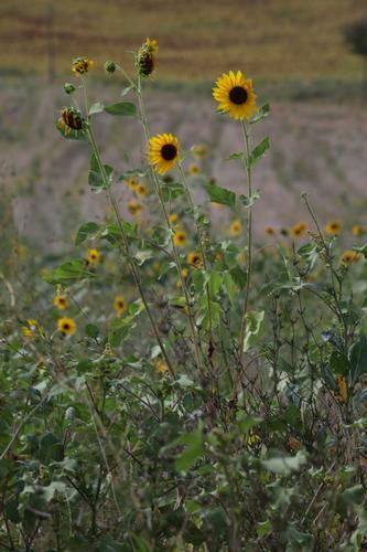 Nel cuore verde dell'Umbria - Campello sul clitunno (1005 clic)