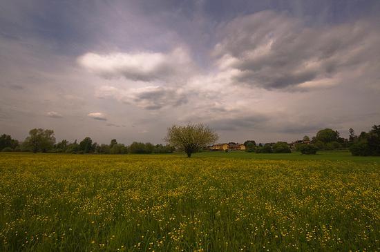 Primavera - Giussano (1292 clic)