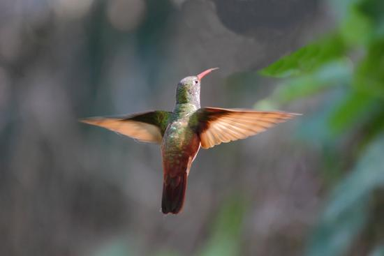 colibri' - Sant'alessio con vialone (2004 clic)