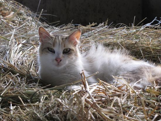 gatto in relax - SORBOLO - inserita il 23-Sep-13