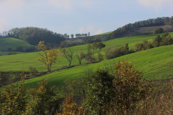 autunno in collina - Torrechiara (1245 clic)