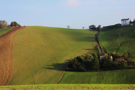 colline parmensi - FELINO - inserita il 15-Nov-13