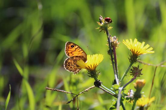 farfalla e coccinella che mangiano - SORBOLO - inserita il 29-Oct-13
