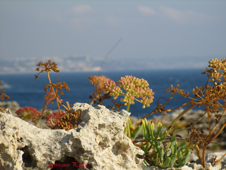 Ripili - Tricase porto (911 clic)