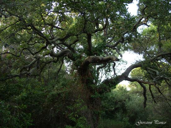 Madre Natura - Tricase porto (899 clic)