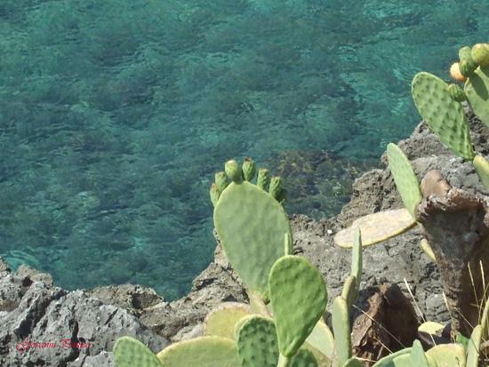 TerraMare - Castro marina (819 clic)