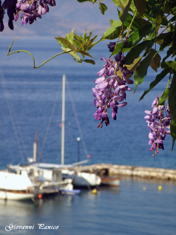 Mediterraneo_5 - Tricase marina serra (955 clic)