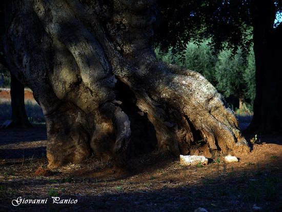 Secoli di Vita - Tricase (935 clic)