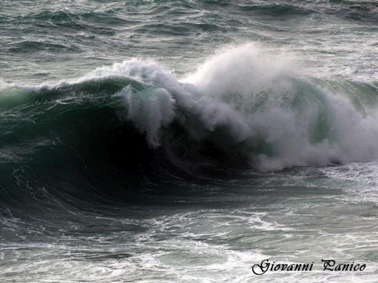 Cavallone!! - Tricase porto (935 clic)