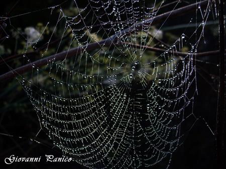 Ragnatela nella Nebbia - Tricase (730 clic)