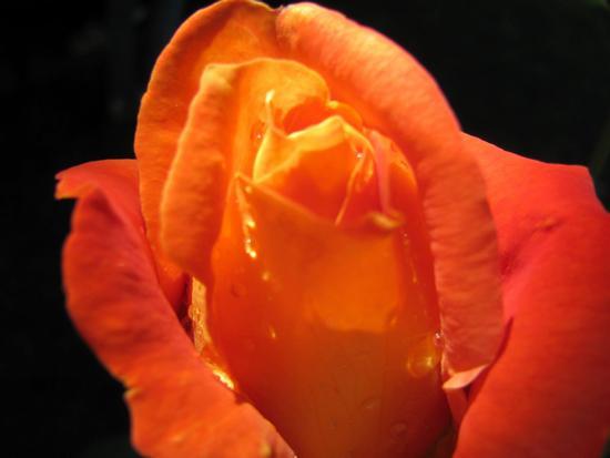 i giardini che nessuno sa...... - Rovato (636 clic)