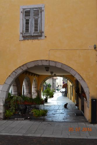 ...il gatto - Gorizia (762 clic)