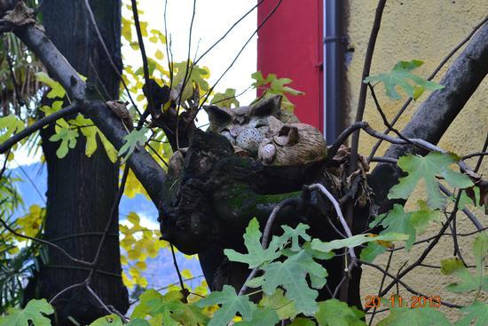 gatti a riposo... - Merano (949 clic)