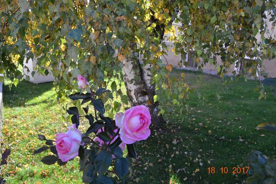 omaggio floreale - Fondo (551 clic)