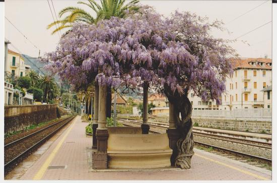 in attesa del treno... - Alassio (1446 clic)