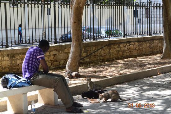 condivisione del pasto con i gatti - Trapani (2118 clic)
