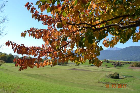 autunno - Fondo (394 clic)