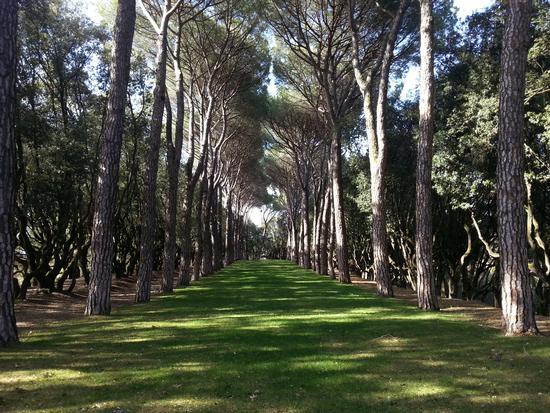 Viale alberato.  - Perugia (1014 clic)