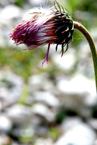 L'attesa - San vigilio di marebbe (1153 clic)