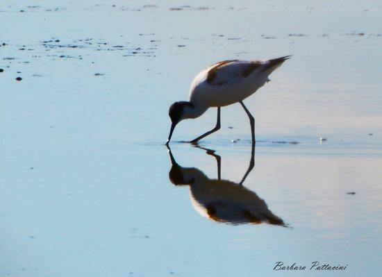 bird upon the mirror - Lido delle nazioni (1071 clic)
