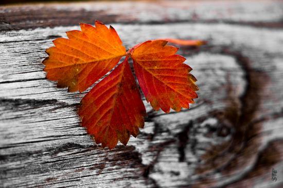 frammento d'autunno a Cogne -  - inserita il 09-Dec-13