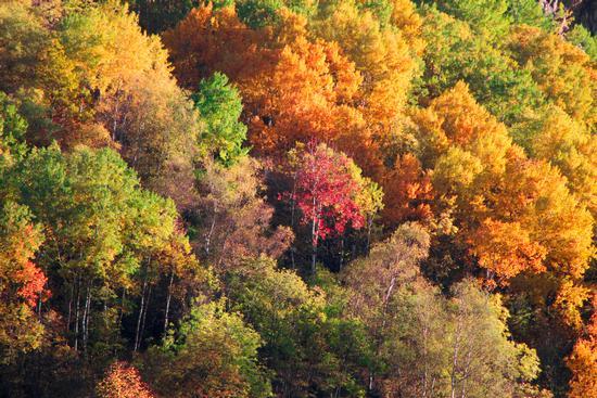 il solito autunno... (607 clic)