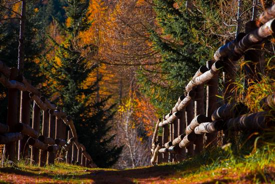 sentiero per Lillaz - Cogne (4264 clic)