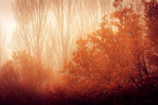 Amica Nebbia - RAVENNA - inserita il 23-Dec-13