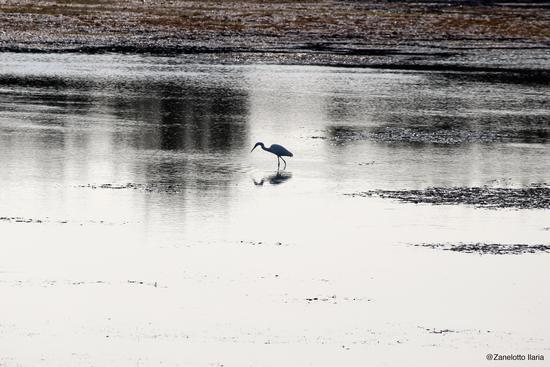 Specchio d'acqua - Grado (919 clic)