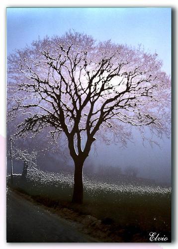 Nella Nebbia - Loreto (1065 clic)