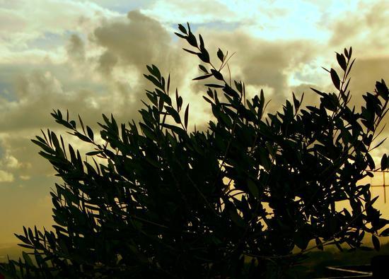 Il cielo - Velletri (915 clic)