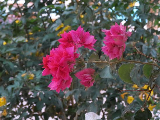 fiori d' autunno - Orbassano (1158 clic)