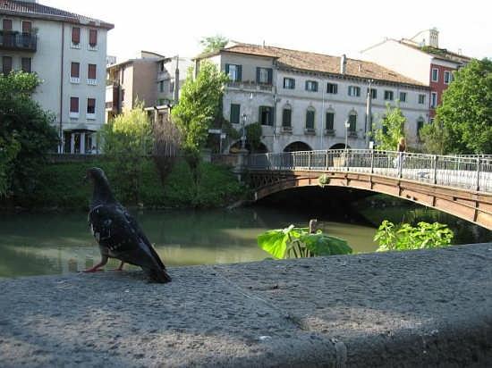 Specola - Padova (3703 clic)