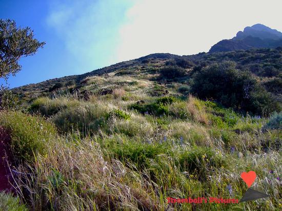 La natura  di Ginostra (463 clic)