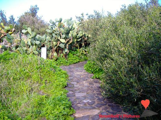 Camminando per le strade di Ginostra (658 clic)