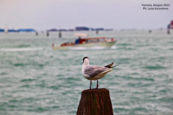Venezia (782 clic)